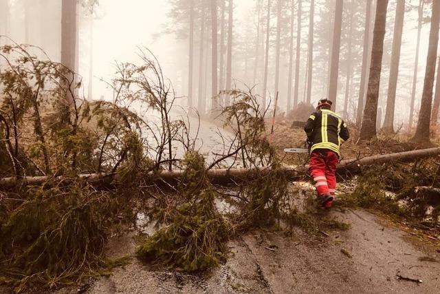 Sturm stoppt Veranstaltungen, knickt Bäume und bremst Züge aus