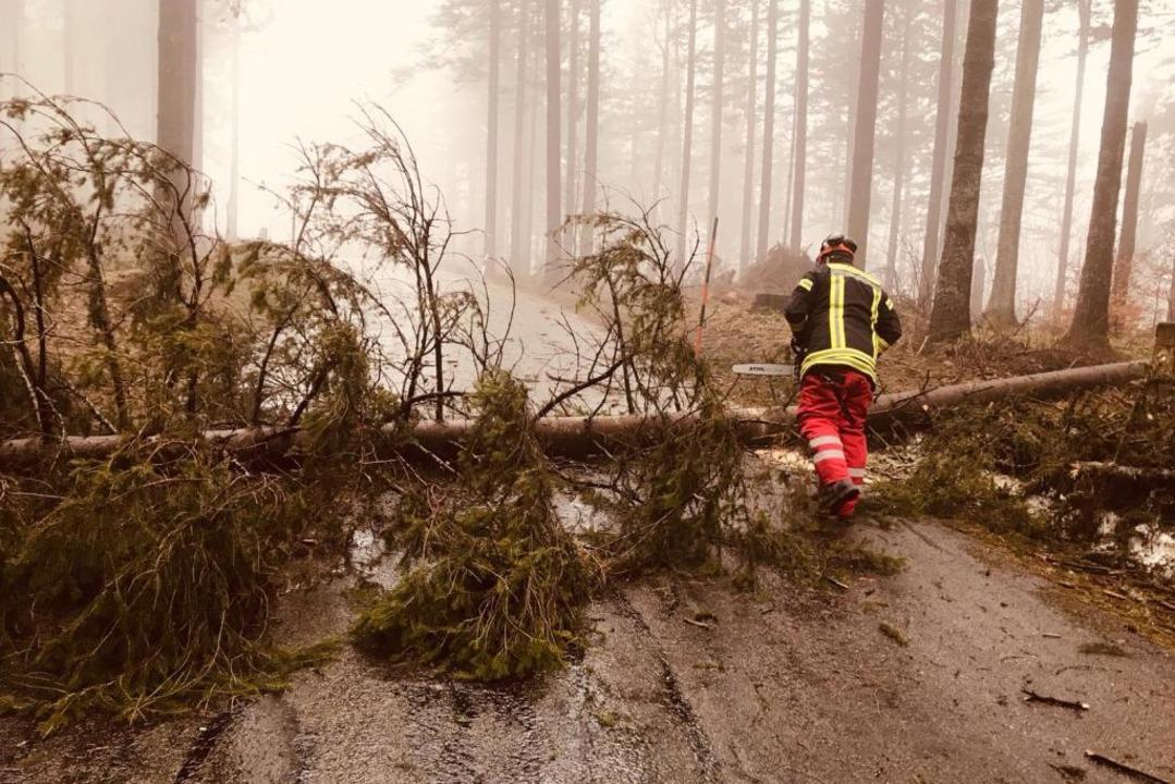 Umgestürzte Bäume blockierten am Sonnt...andelgebiet. Die Feuerwehr musste ran.  | Foto: Feuerweh