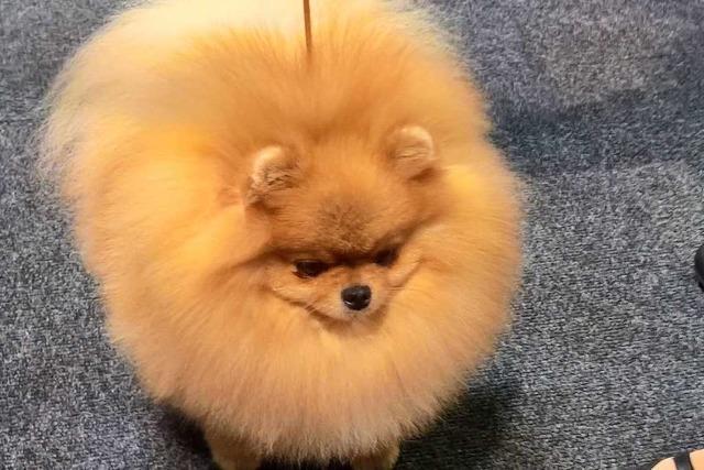 Hunde-Hauptstadt Offenburg – Veranstalter weisen Peta-Kritik zurück