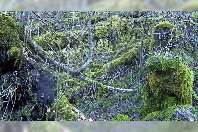 Plädoyer für Waldwildnis