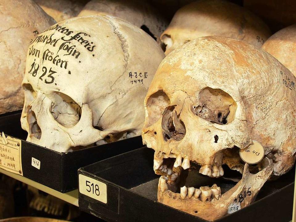 Schädel aus der Sammlung des Anatomen Alexander Ecker in Freiburg.  | Foto: Thomas Kunz