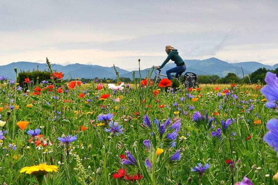 300.000 Euro mehr als die vorgesehenen...ojekte für Biodiversität (Symbolbild).  | Foto: Michael Bamberger