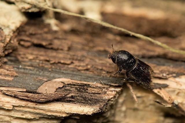 Ein Käfer bereitet Sorgen