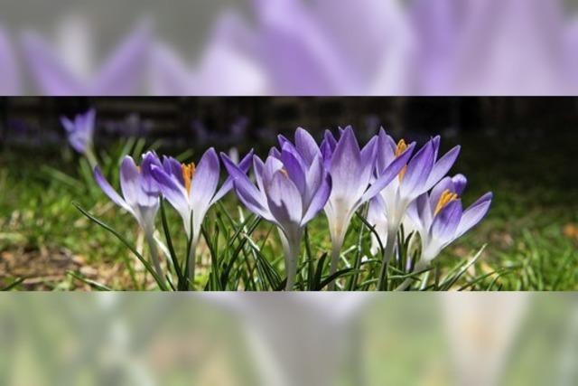 Die Wiesen in Violett