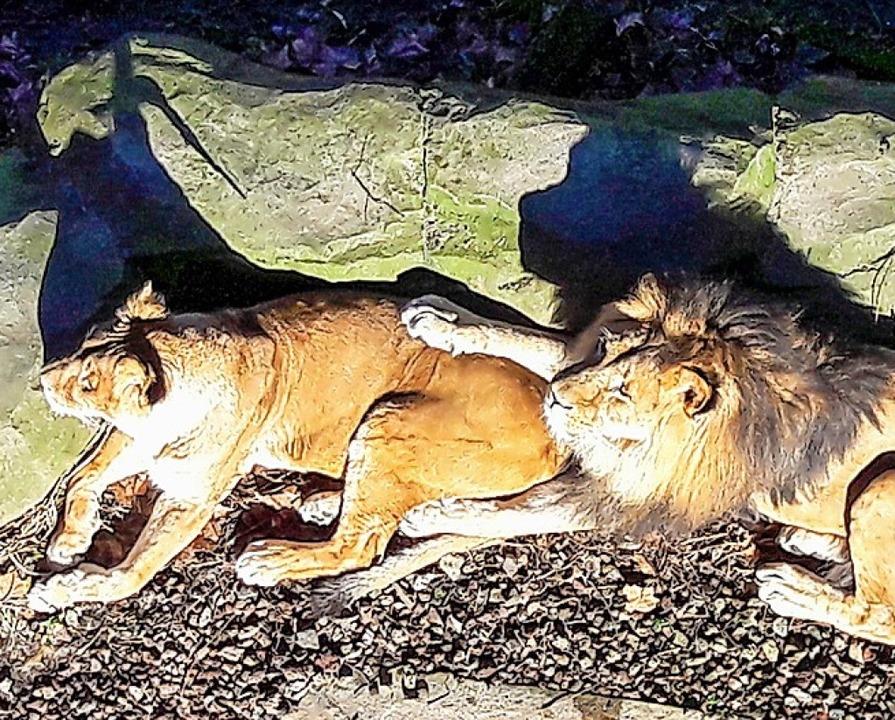 Zoo, Antwerpen  | Foto: Andrea Schiffner