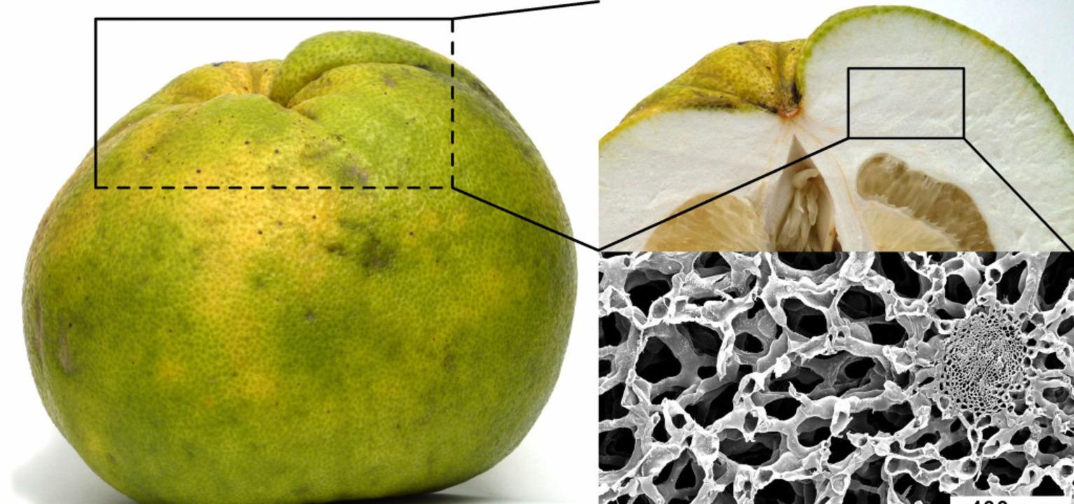 Die schaumartige Struktur einer Pomelo könnte gut zu einem Fahrradhelm passen.