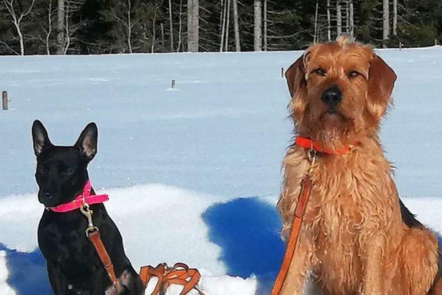 Im Schneesturm verschwunden - Revierförster vermisst zwei Jagdhunde