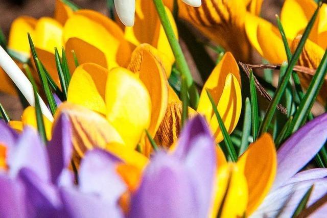 Temperaturen bis 20 Grad: Der Frühling kommt wieder
