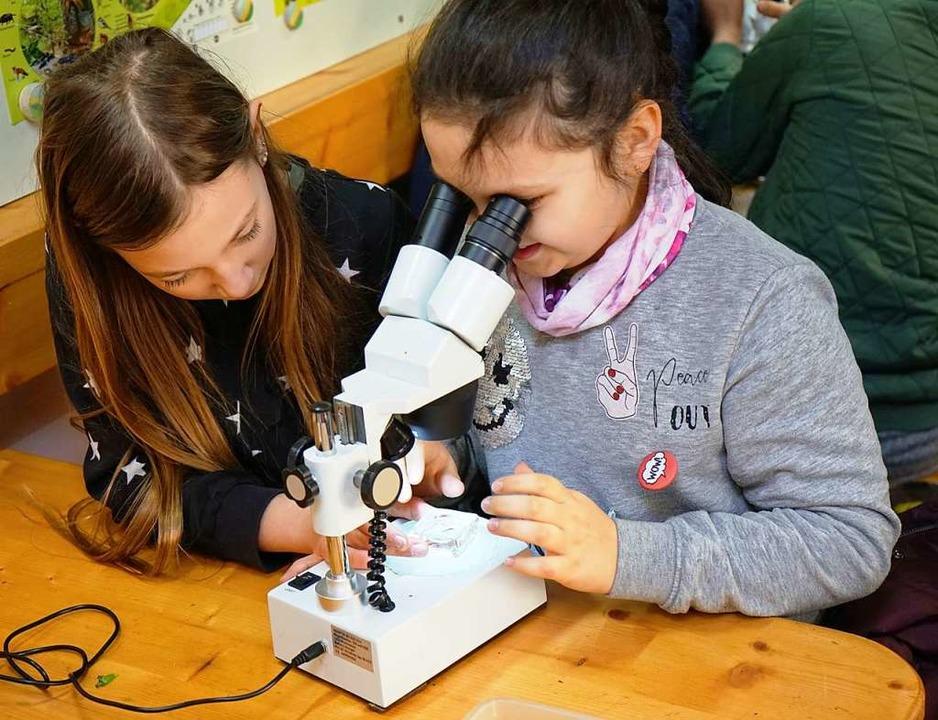 Umkircher grundschüler erkunden mit dem Ökomobil die natur umkirch