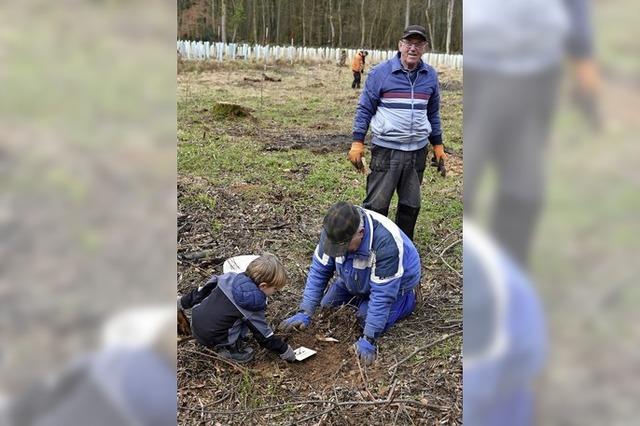 30 Helfer pflanzen 1000 Bäume