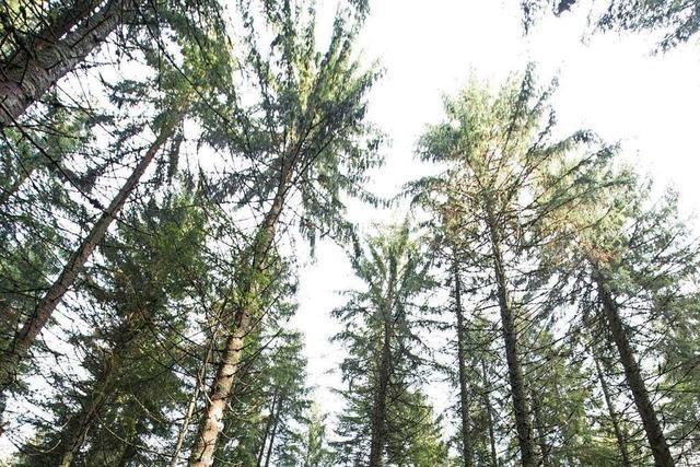Staatswald und Forstbehörden arbeiten künftig strikt getrennt