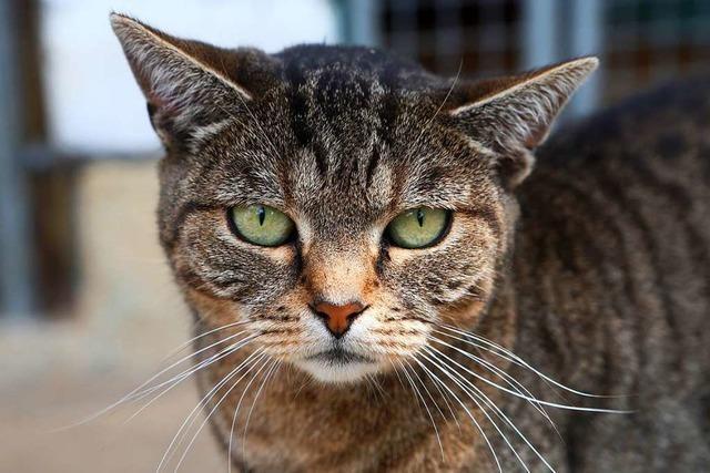 Lahr wagt Vorstoß gegen freilebende Katzen