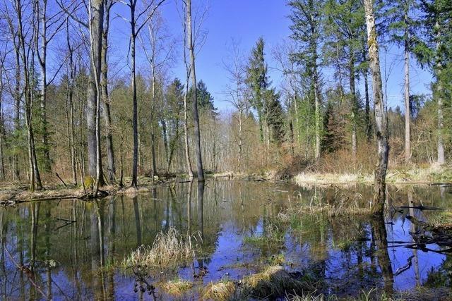 Reuter Seenplatte
