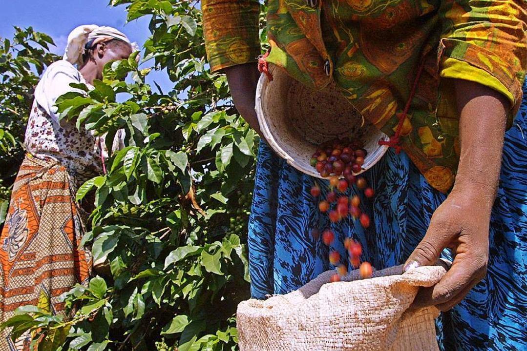 Nachhaltig Arbeitsplätze in Afrika auf...hren Projekten erreichen (Symbolbild).  | Foto: AFP
