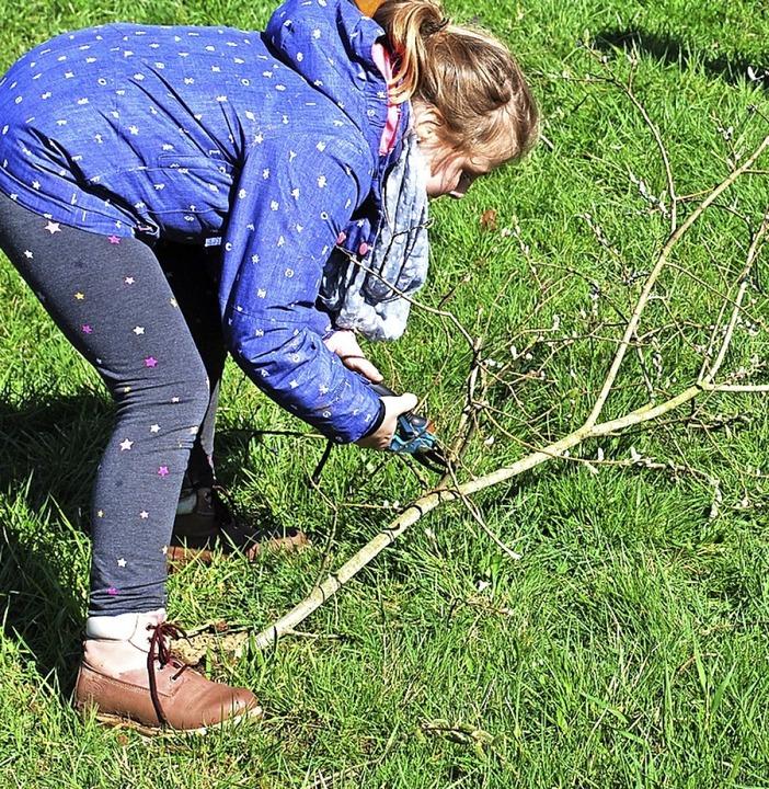 Auch die Rebschere wird eingesetzt, um die Weiden vorzubereiten.  | Foto: Sylvia-Karina Jahn