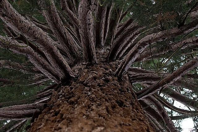 Ein Baum für jedes Neugeborene?