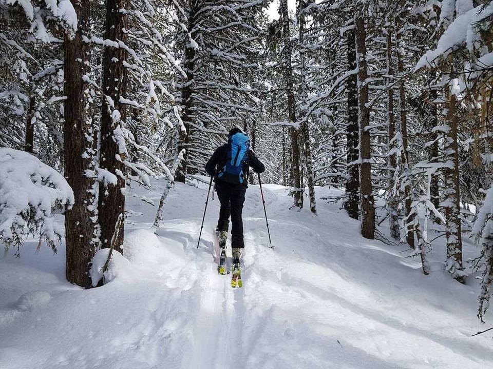 Durch dichten Kiefernwald führt eine Skitour hinauf zu den Feldringer Böden.   | Foto: Jannik Jürgens