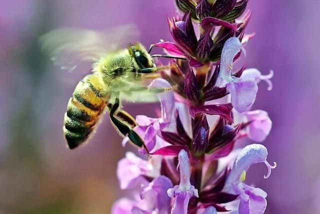 Wie unterscheiden sich Bienen, Wespen und Hummeln?