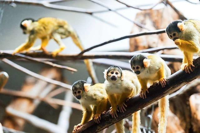 Der Basler Zoo ist und bleibt ein Besuchermagnet