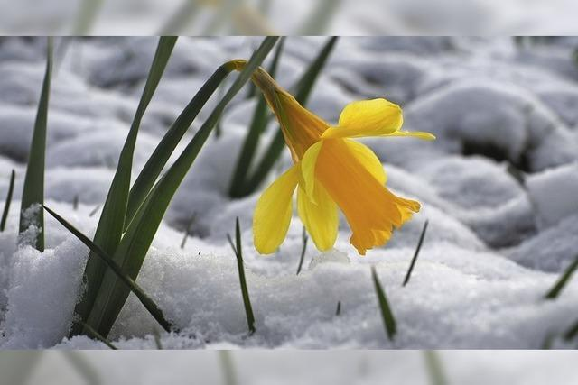 Winter trifft Frühling