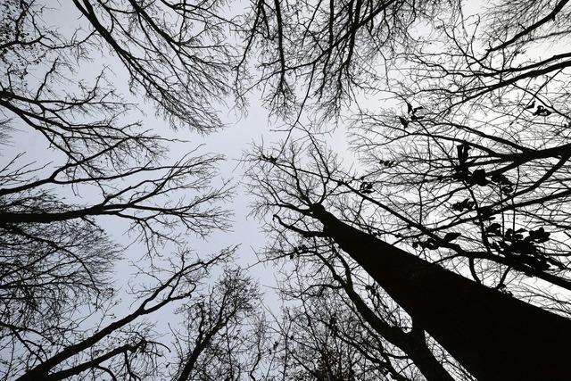 Herrischried organisiert den Forst neu