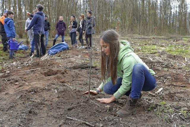 Bäume für den Klimaschutz