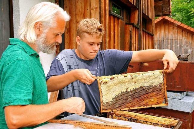 Ein gutes Bienenjahr und interessierte Nachwuchsimker in Gutach und Simonswald