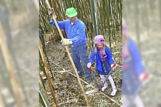 Frühjahrsputz im Bambuswald