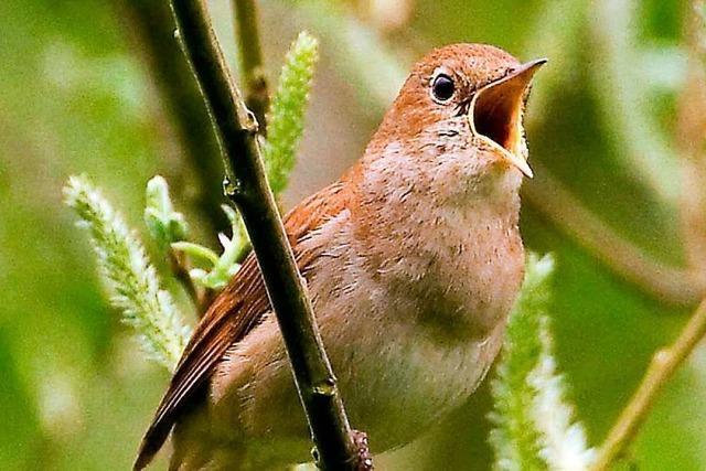 Bei einem Konzert in Kirchzarten wurden Vogelstimmen in Musik verwandelt