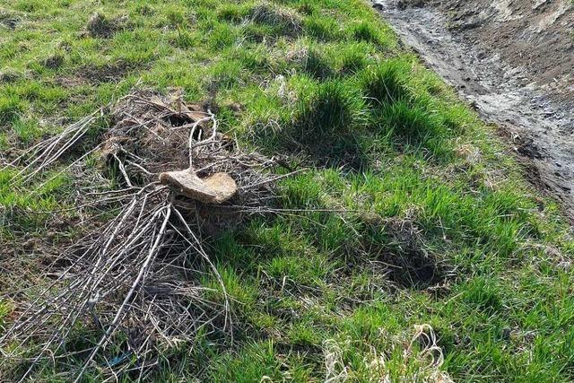 80 Sträucher und 18 Bäume aus ökologischen Ausgleichsmaßnahmen mutwillig beschädigt