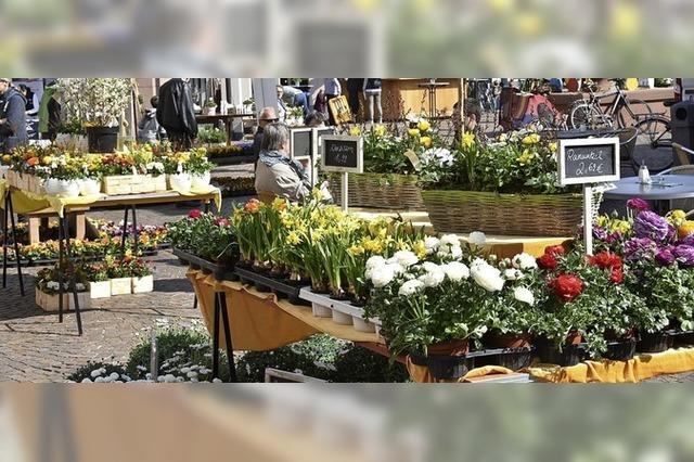 Märkte für Frühlingsblumen und -deko, Osterhasen und Fahrräder in Gundelfingen und Glottertal