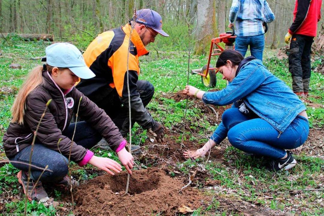 Emmendinger Schüler pflanzen Stieleich...hutz – in der schulfreien Zeit.   | Foto: Annika Sindlinger
