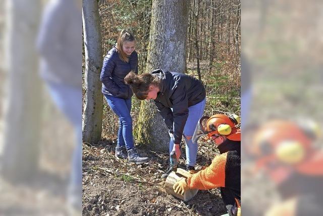 Knochenjob Waldarbeit