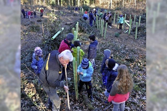 Klimaschutz im eigenen Wald