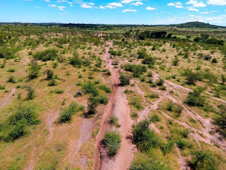 Trittpfade von Weidetieren führen mitten in die Schutzgebiete.  | Foto: dpa