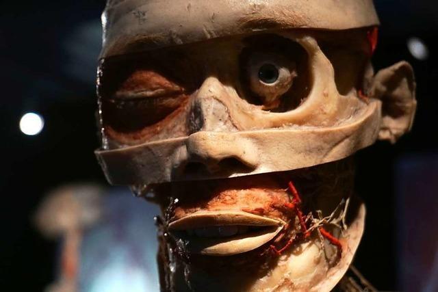 So entstehen die Plastinate der Körperwelten-Ausstellung in Freiburg