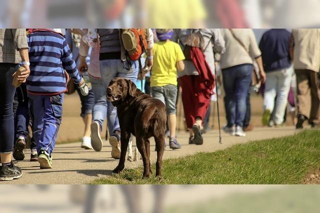 Hunde und Hunderte Wanderer für