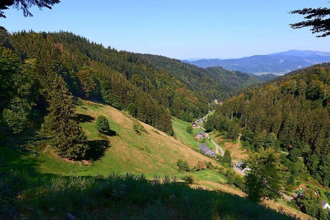 Auf dem Taubenkopf an der Nordflanke d...ben als  auch im Kappler Tal (rechts).  | Foto: Ingo Schneider