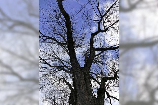 Inventur der Bäume