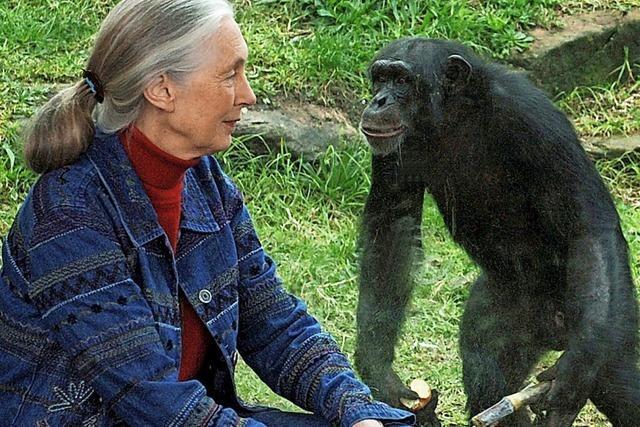 Ein Leben für die Schimpansen