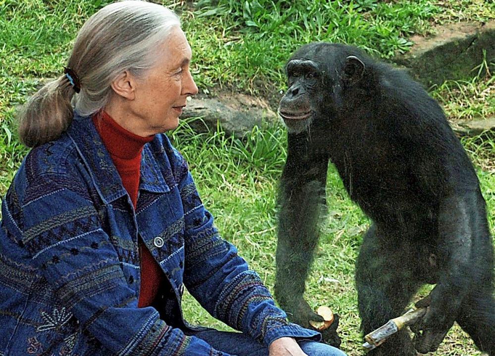 Verstehen sich prächtig: Jane Goodall und ein  Schimpanse.  | Foto: DPA
