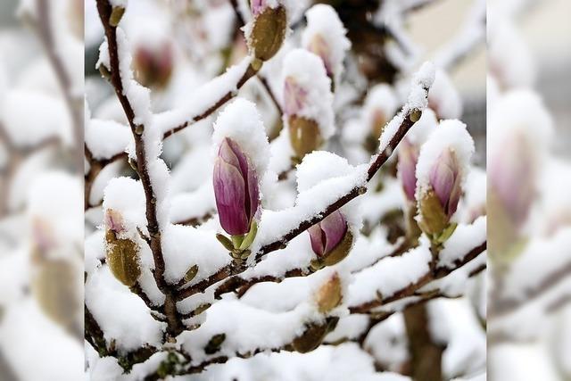Der Frühling macht eine Pause