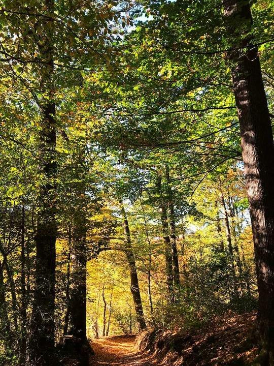 Waldbaden     Foto: Andrea Steiger