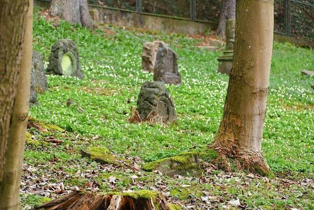 Lörracher Stadtgrün fällt 23 Bäume am Schützenwaldweg
