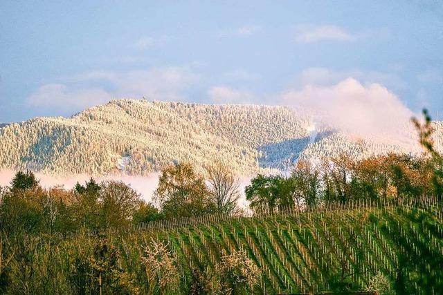 Blühende Bäume in St. Georgen – und Schnee auf dem Schauinsland