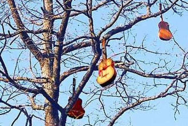Künstler hängt 13 Gitarren in Freiburger Baum – und könnte Ärger bekommen