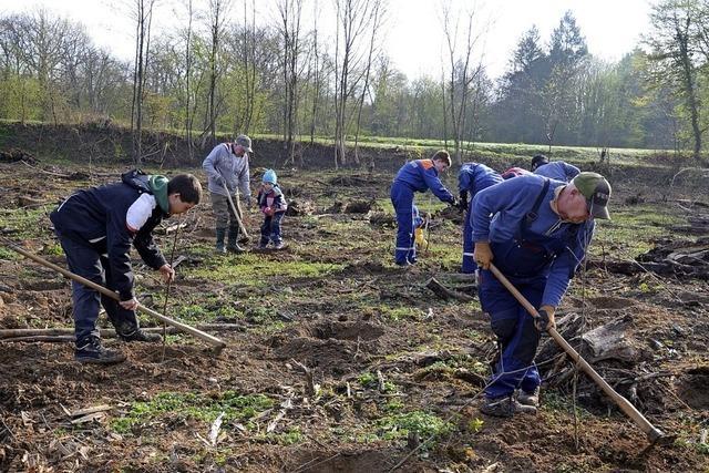 In 15 Jahren wurden rund 50 000 Bäume gepflanzt