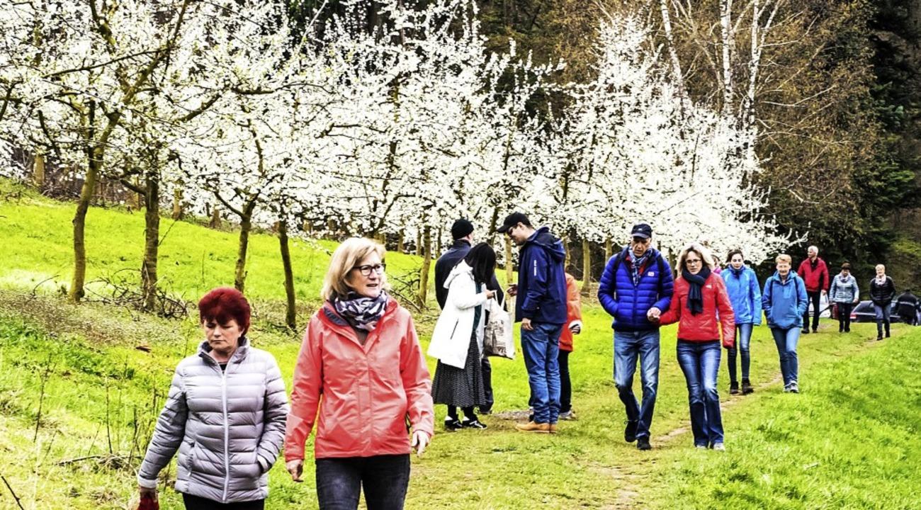 Die Kirschblüte im Eggenertal lockte a... zwischen Niedereggenen und Feuerbach.  | Foto: Alexander Anlicker