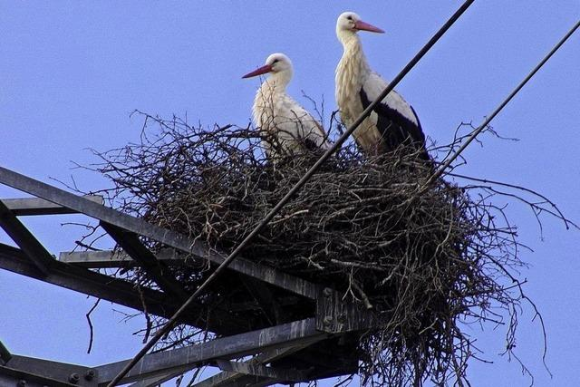 Storchenpaar weicht auf Starkstrom aus