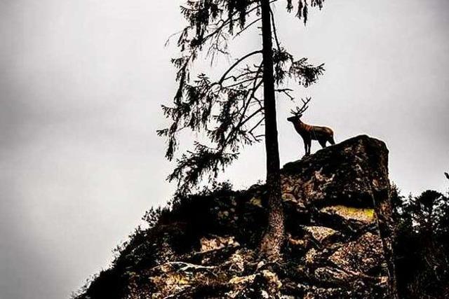 Illegaler Plastik-Hirsch steht wieder auf seinem Felsen im Wehratal
